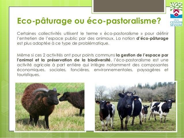 Eco-pâturage – Fabrice JAN Slide 3