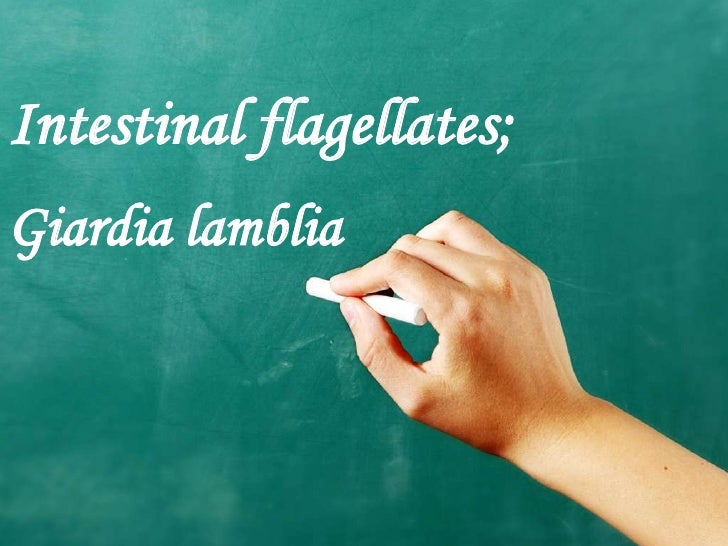 Intestinal flagellates;Giardia lamblia