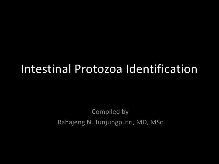 Intestinal Protozoa Identification                 Compiled by       Rahajeng N. Tunjungputri, MD, MSc