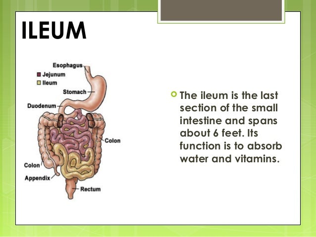 Intestinal anatomy and physiology
