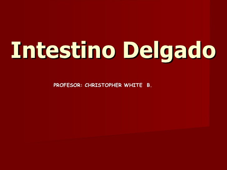 Intestino Delgado PROFESOR: CHRISTOPHER WHITE  B.