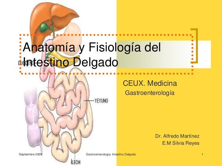 Septiembre 2009<br />Gastroenterologia. Intestino Delgado<br />1<br />Anatomía y Fisiología del Intestino Delgado<br />CEU...