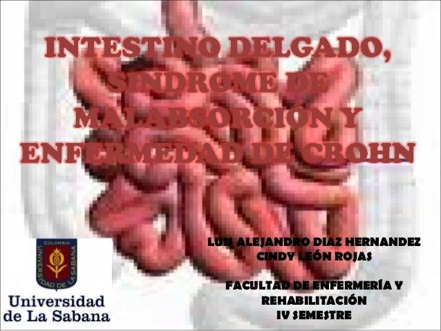 LUIS ALEJANDRO DIAZ HERNANDEZ        CINDY LEÓN ROJAS  FACULTAD DE ENFERMERÍA Y      REHABILITACIÓN         IV SEMESTRE