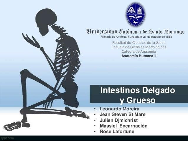 Universidad Autónoma de Santo Domingo Primada de América, Fundada el 27 de octubre de 1538  Facultad de Ciencias de la Sal...