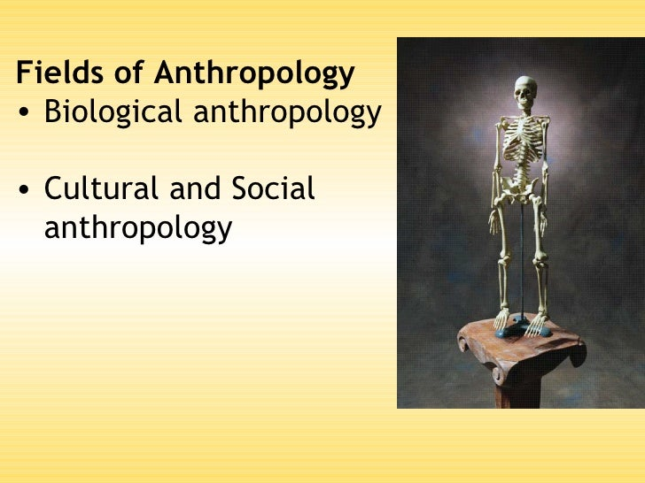 anthropology and its branches The field of anthropology is usually broken down into four main branches: cultural  anthropology, biological anthropology, linguistic anthropology and.