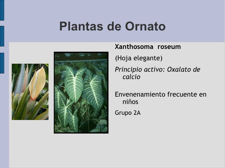 Cphap 048b intoxicacion por plantas 2a parte for 10 plantas de ornato