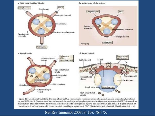 Picture Nat Rev Immunol 2008; 8( 10): 764-75.
