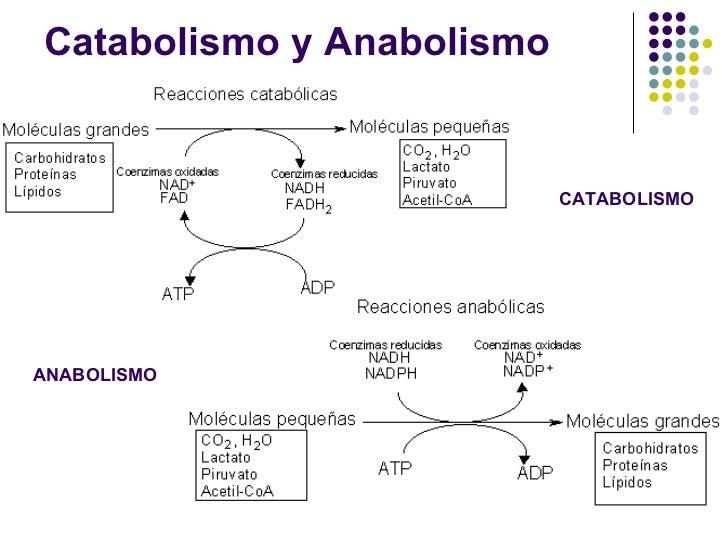 ciclo para principiantes anabolicos