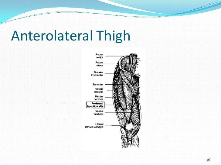Anterolateral Thigh                      16