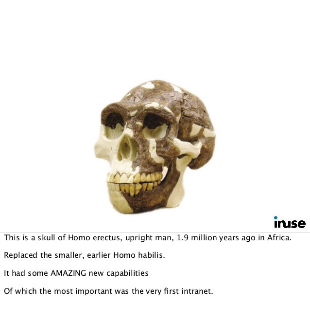 This is a skull of Homo erectus, upright man, 1.9 million years ago in Africa. Replaced the smaller, earlier Homo habilis....
