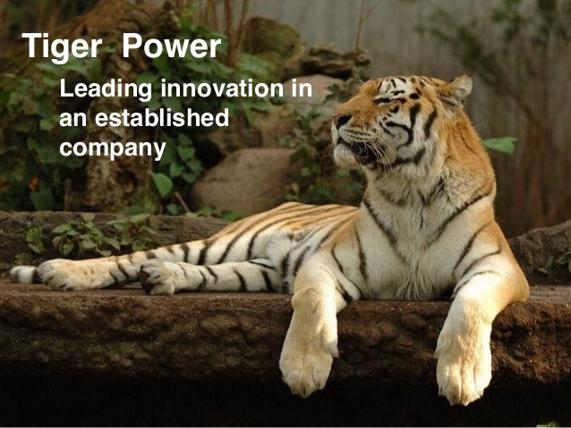 Leading innovation in an established company Tiger Power