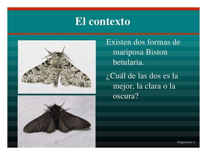 El contexto <ul><li>Existen dos formas de mariposa Biston betularia.