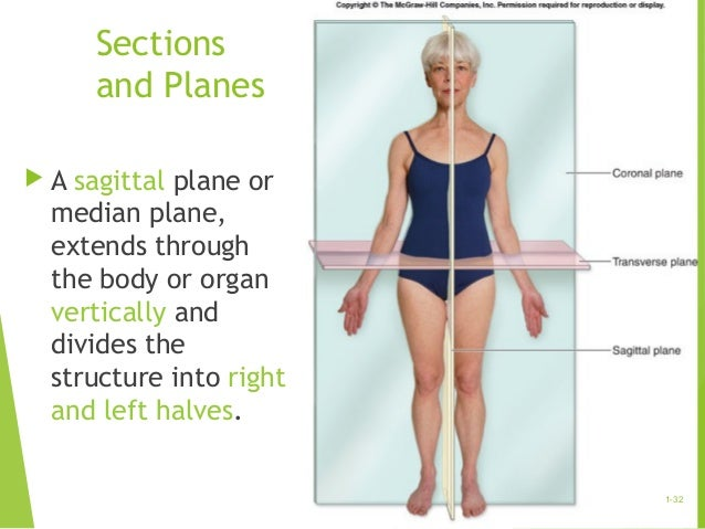What is meant by anatomy