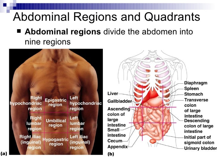 Intro to anatomy powerpoint 18 abdominal regions and quadrants ccuart Image collections