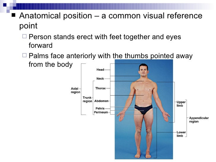 Intro To Anatomy Powerpoint