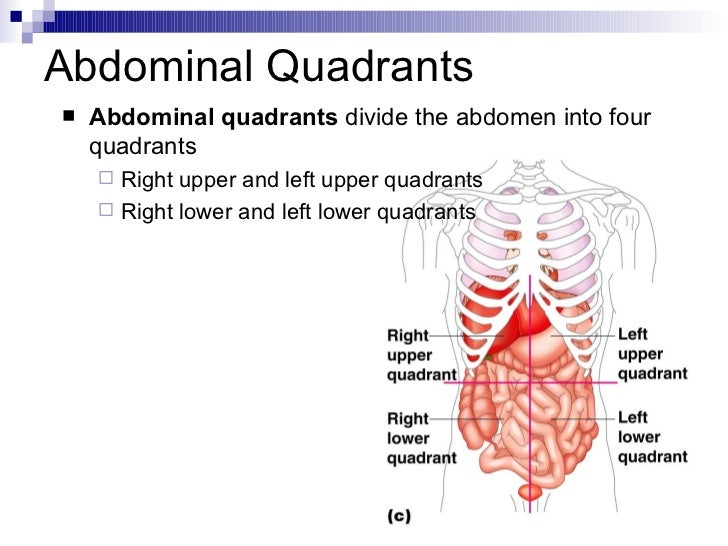 Intro To Anatomy Powerpoint