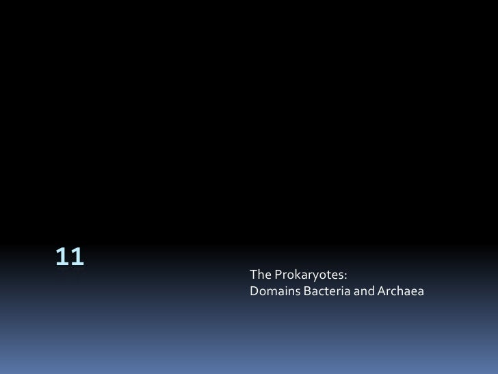 11<br />The Prokaryotes:Domains Bacteria and Archaea<br />