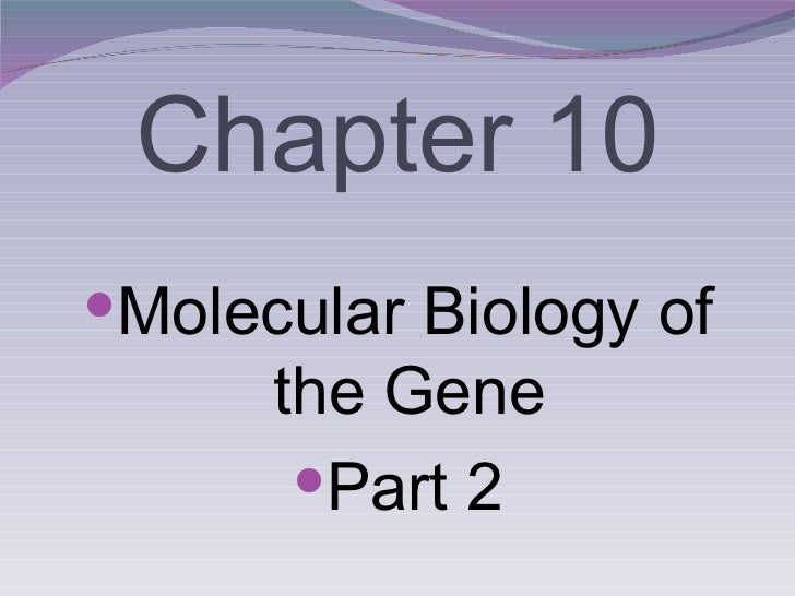 Chapter 10 <ul><li>Molecular Biology of the Gene </li></ul><ul><li>Part 2 </li></ul>