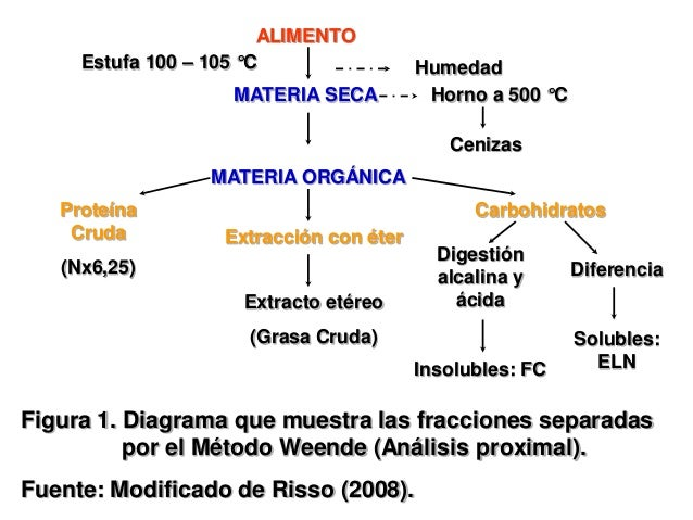 ESQUEMA DE WEENDE PDF