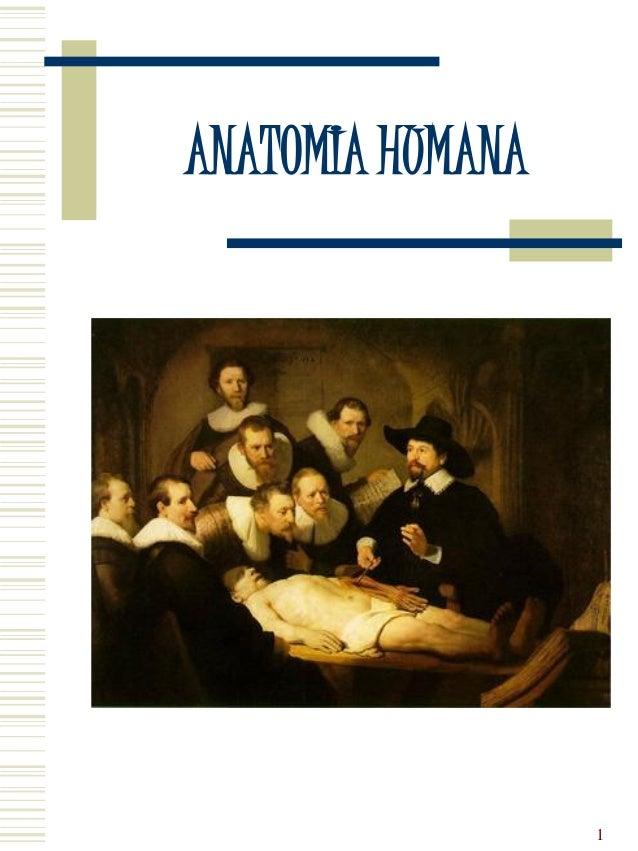 ANATOMIA HUMANA   Professor Igor Patrick          Campos            1