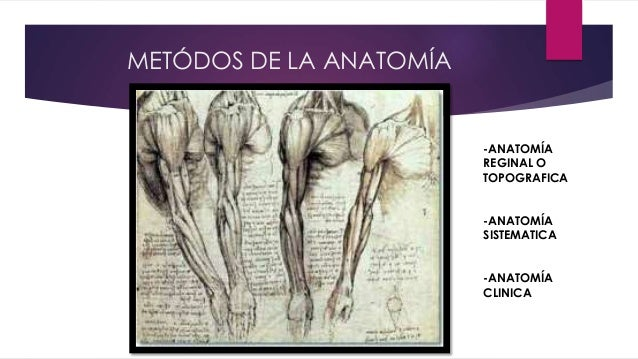 Introduccnión a la anatomía de moore