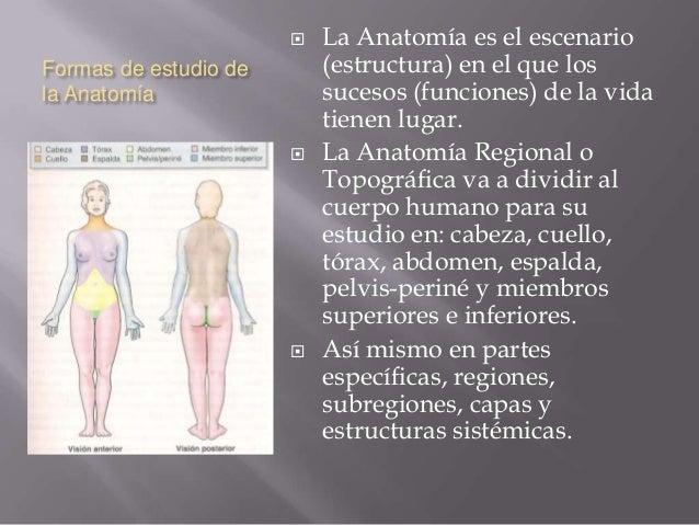 Introducción a la anatomía y terminología anatómica