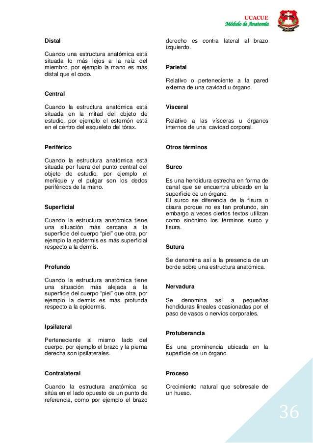 Introducción al Estudio de la Anatomía Humana, E.E.