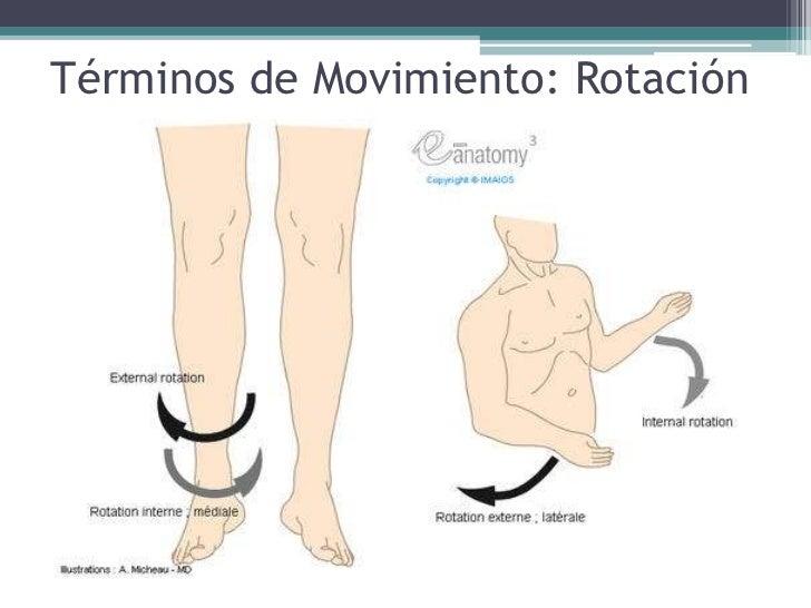 Magnífico Anatomía Movimiento De Rotación Colección de Imágenes ...