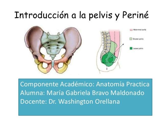 Introducción a la pelvis y periné