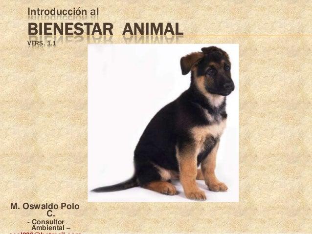 Introducción al   BIENESTAR ANIMAL   VERS. 1.1M. Oswaldo Polo       C.   - Consultor     Ambiental –