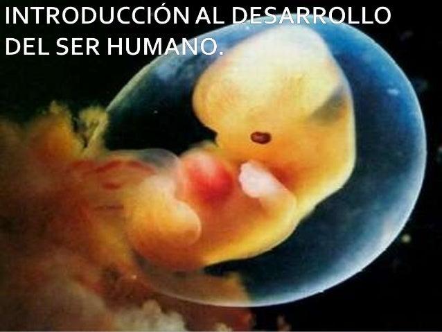    El desarrollo humano    es un proceso    continuo que    comienza cuando el    OVOCITO ( óvulo)    de la mujer es    f...