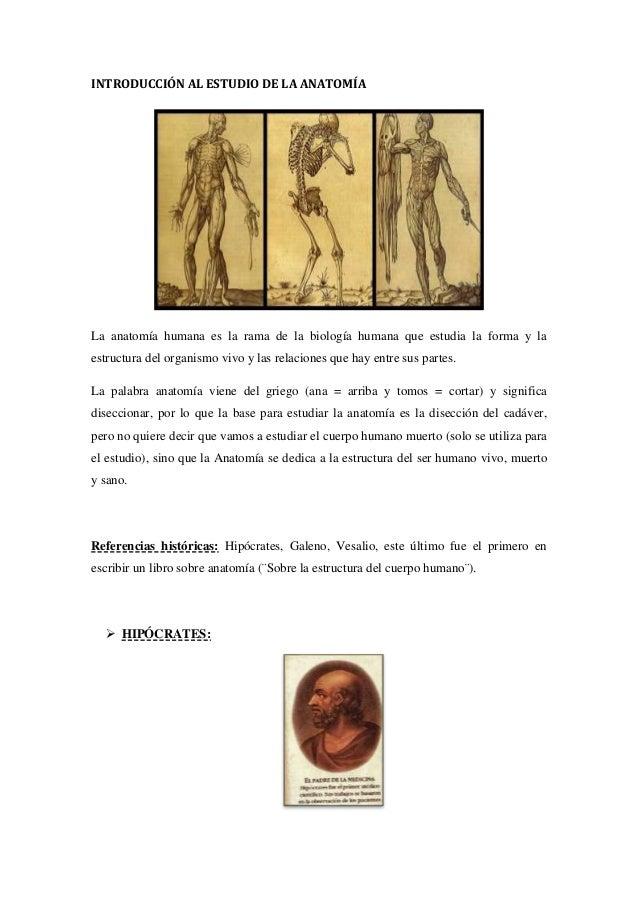 Único Estudiar La Anatomía Y Fisiología En Línea Composición ...