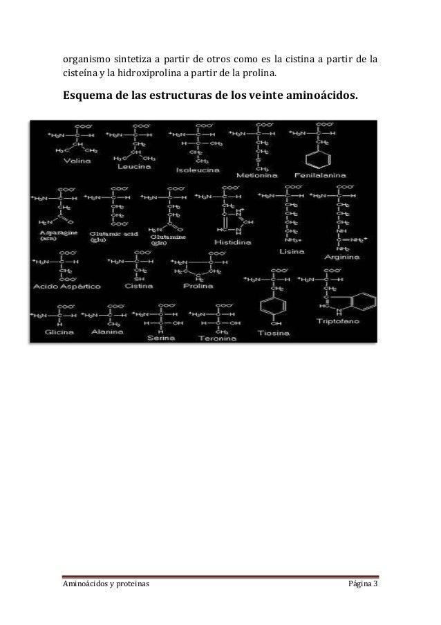 Aminoácidos y proteinas Página 3organismo sintetiza a partir de otros como es la cistina a partir de lacisteína y la hidro...