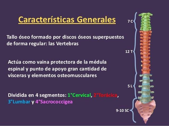 Introducción columna vertebral