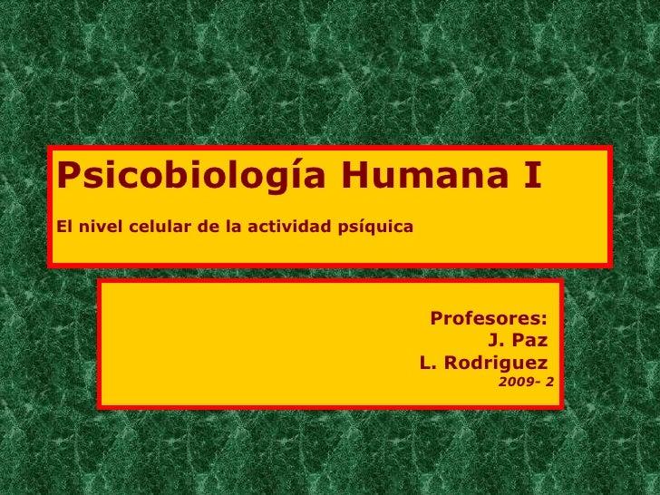 Psicobiología Humana I  El nivel celular de la actividad psíquica   Profesores:  J. Paz  L. Rodriguez  2009- 2