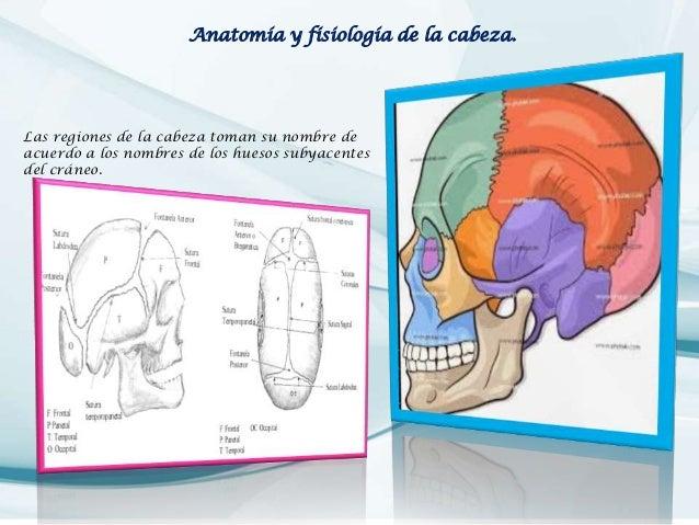 examen fisico de cabeza Slide 2