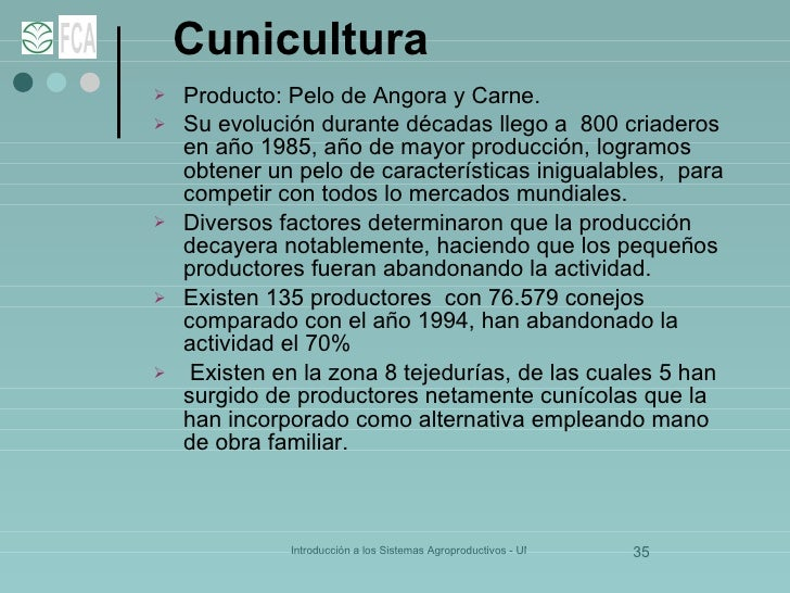 Cunicultura   <ul><li>Producto: Pelo de Angora y Carne. </li></ul><ul><li>Su evolución durante décadas llego a  800 criade...