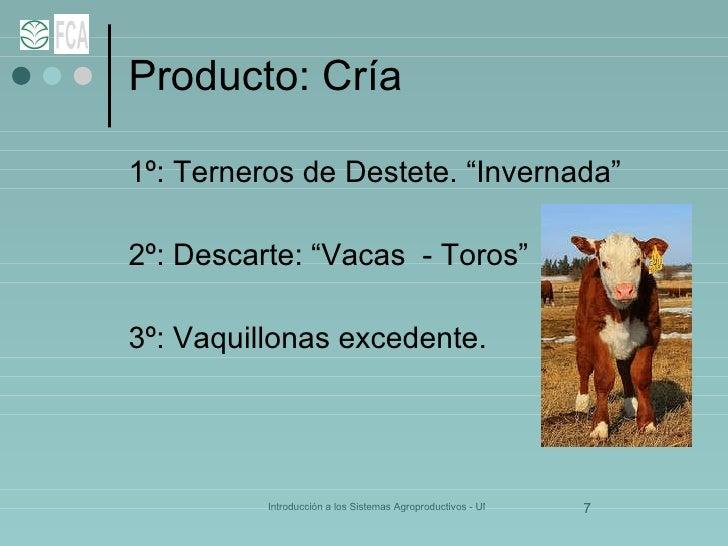 """Producto: Cría <ul><li>1º: Terneros de Destete. """"Invernada"""" </li></ul><ul><li>2º: Descarte: """"Vacas  - Toros"""" </li></ul><ul..."""