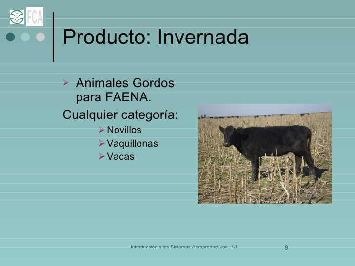 Producto: Invernada <ul><li>Animales Gordos para FAENA. </li></ul><ul><li>Cualquier categoría: </li></ul><ul><ul><ul><li>N...
