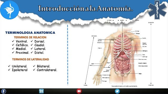 Introduccion a la anatomia.