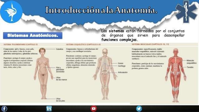 Introduccion a la anatomia.