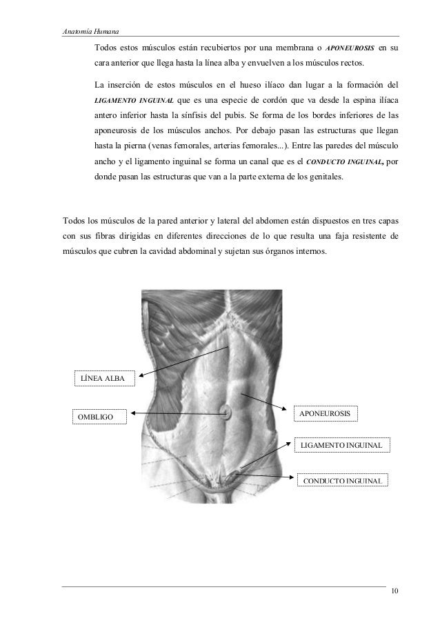 Introduccion a la anatomia 3 (1)