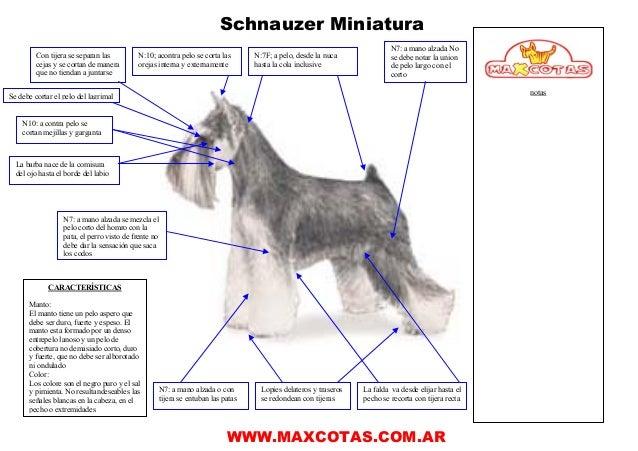 Manual corte pelo schnauzer