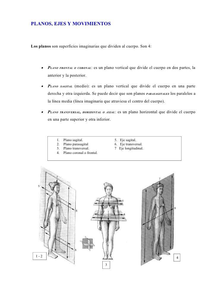 Excelente La Forma De Estudiar La Anatomía Para El Paso 1 Foto ...