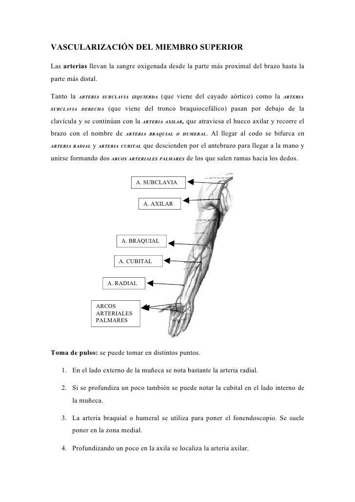 Introduccion anatomía enfermería