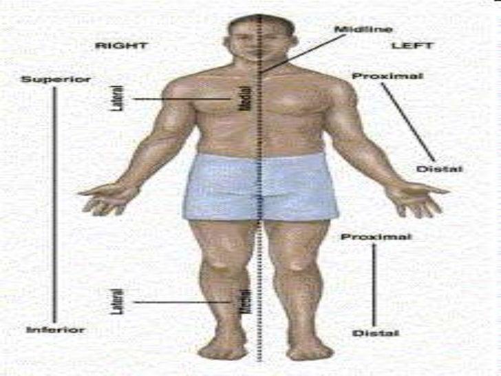 Introduccion anatomia y fisiologia 1
