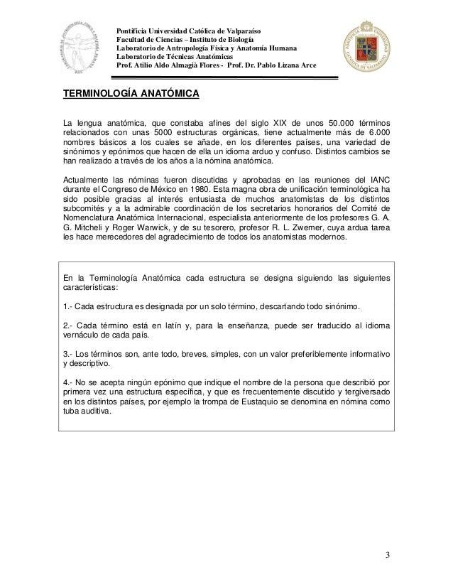 Único Sinónimo De La Anatomía Bosquejo - Anatomía de Las Imágenesdel ...