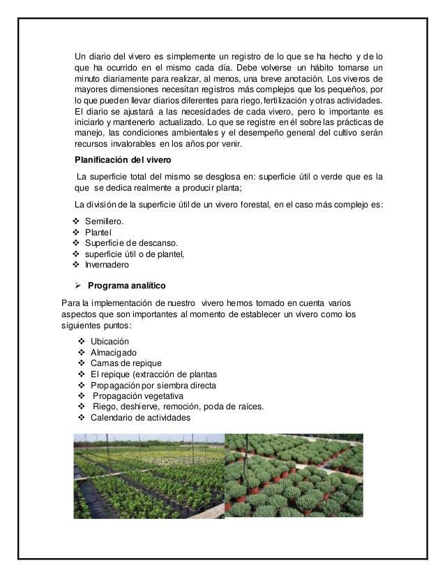 Proyecto de un vivero for Plantas que hay en un vivero