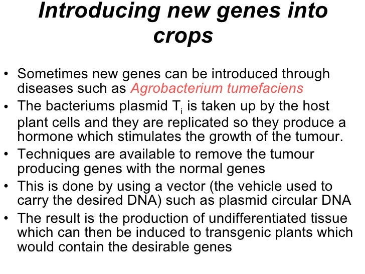 Introducing new genes into crops <ul><li>Sometimes new genes can be introduced through diseases such as  Agrobacterium tum...