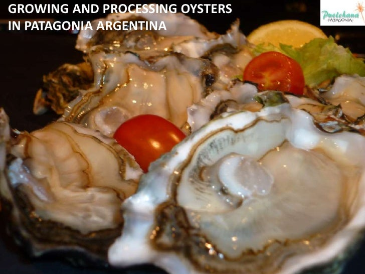 GROWING AND PROCESSING OYSTERS IN PATAGONIA ARGENTINA<br />